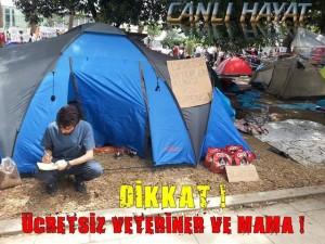 Gratis voer voor straathonden en -katten, Gezipark, 5 juni 2013.